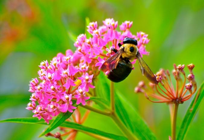 Late Summer Bee 2