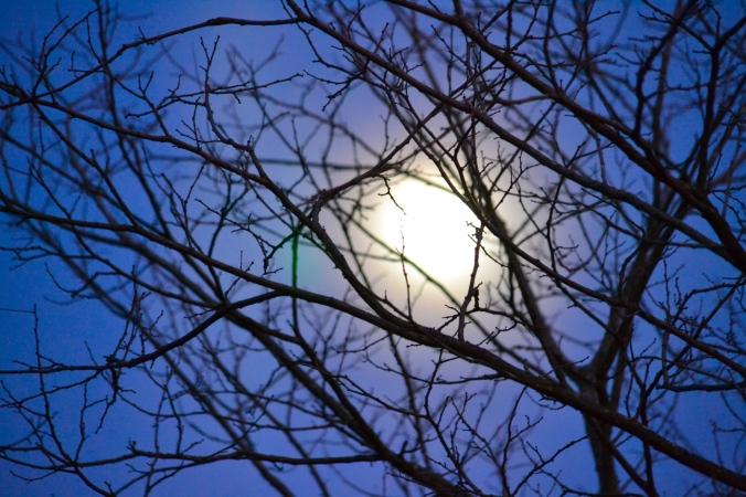 Moon Through Branches.JPG