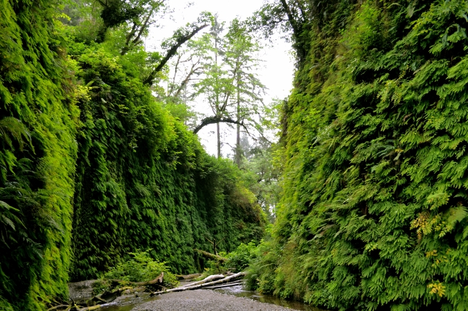 Northern California Fern Covered Walls.jpg