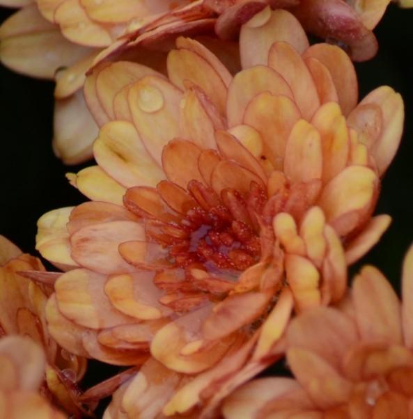 Orange Flower Autumn