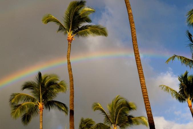 Rainbow Behind Palm Trees.JPG