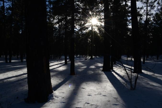 Snowy Pine Forest.JPG