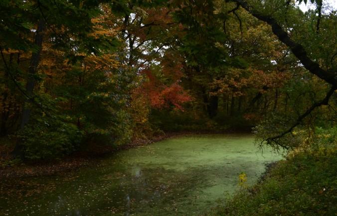 Fall Pond.jpg